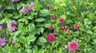giverny-jardin-fleurs-6